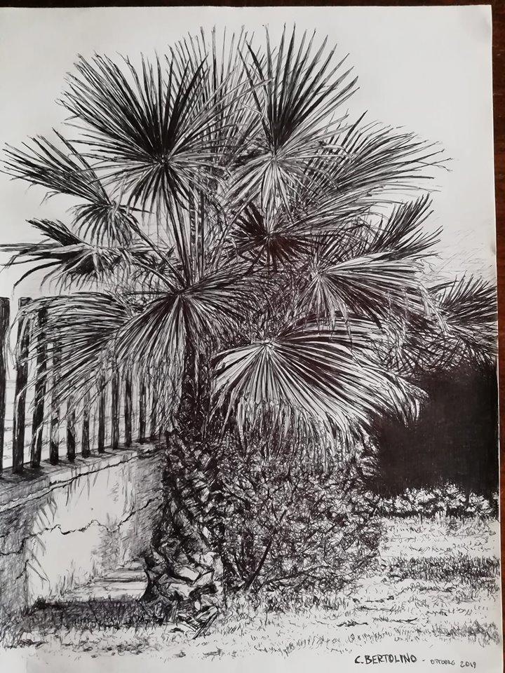 Carlo Bertolino Palma biro su carta