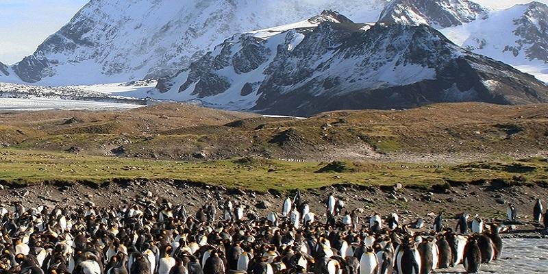 Pinguini a Tristan