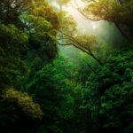 Giornata Mondiale dell'Ambiente 2