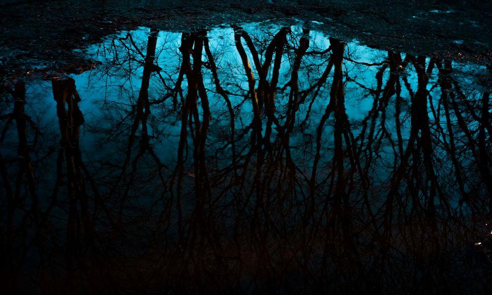 il panico e le crepe nere nelle cose - alberi